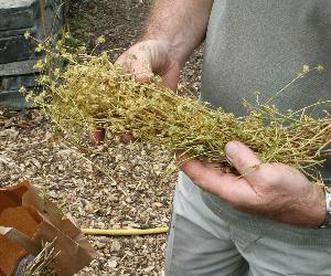 La caractérisation des variétés des espèces potagères