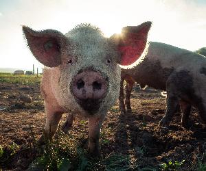Réagissons à l'accord Mercosur : mettons un visage sur notre viande !