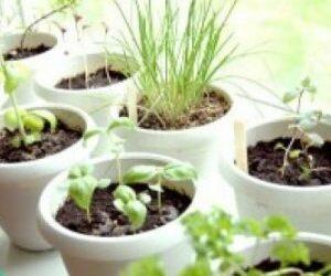 Installer vos plantes aromatiques BIO !