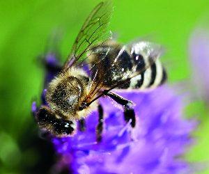 Pourquoi tant de mépris à l'égard des insectes pollinisateurs ?
