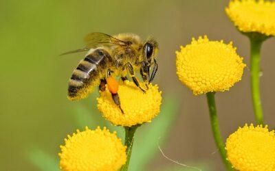 Protection des abeilles : vote favorable de la commission Environnement