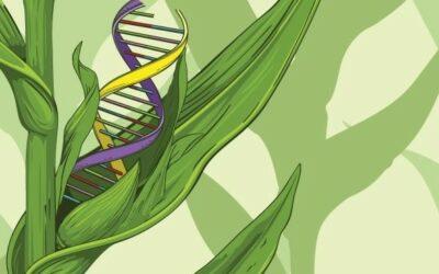 La menace des nouveaux OGM, la résistance s'organise
