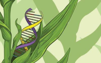 La menace des nouveaux OGM