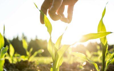 Pour une autonomie alimentaire, pensons aux producteurs BIO Nature & Progrès