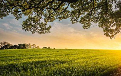 Les ONGs environnementales appellent la Belgique à adopter les stratégies de l'Europe sur la biodiversité, l'alimentation et l'agriculture