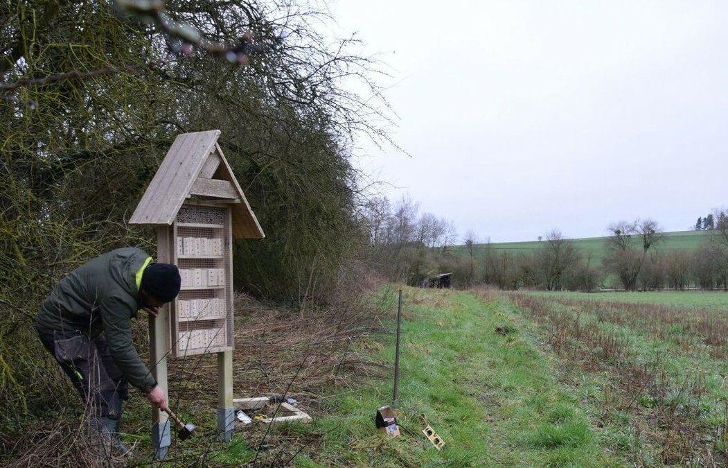 Hôtels à insectes : accueillir les insectes dans son jardin