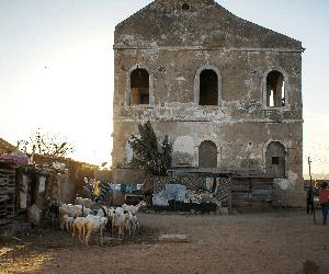 Un petit producteur sénégalais face à la crise du lait