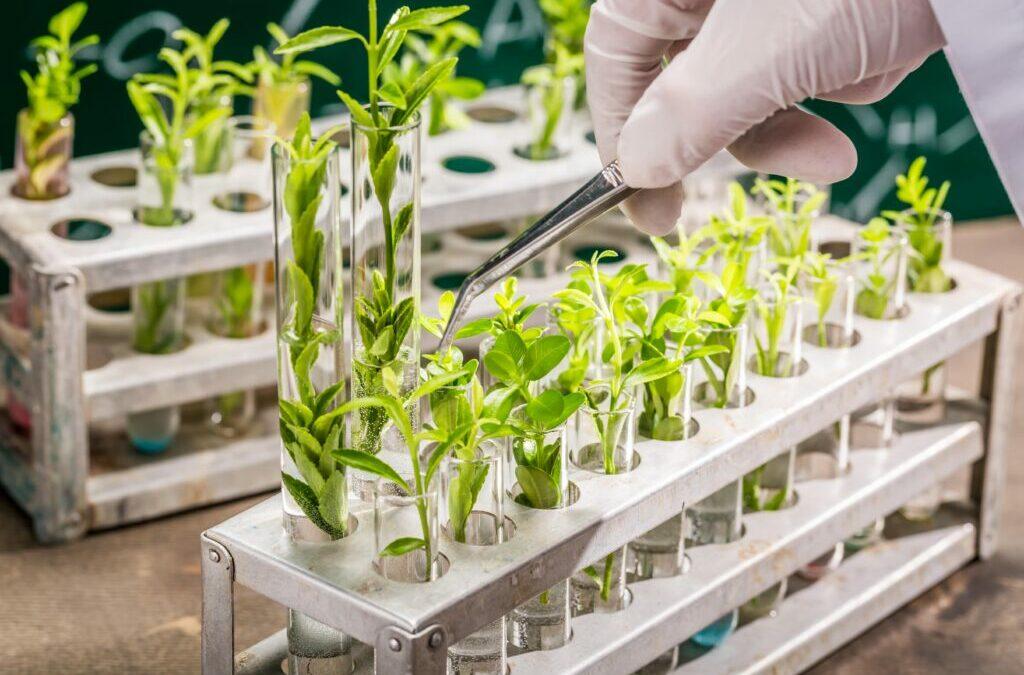 Nouveaux OGM : les citoyens ont le droit de choisir