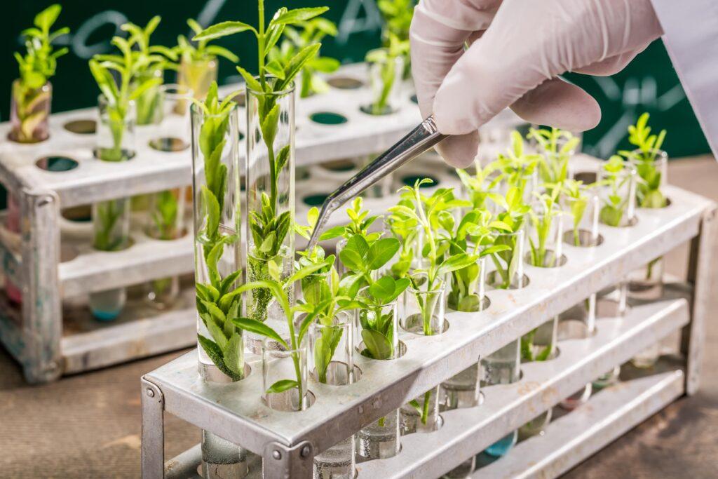 Image nouveaux OGM