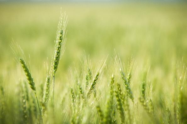 échangeons notre agriculture