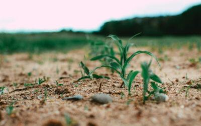 Nouveaux OGM : demande à la Commission du respect intégral de la législation sur les OGM