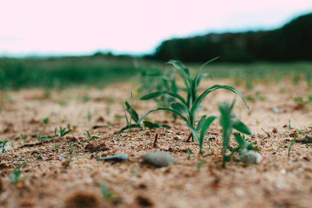 Visuel article nouveaux OGM