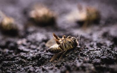Les pays européens autorisent un taux de mortalité de 10% dans les ruches